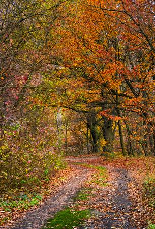 붉은 단풍과 숲에 비포장 도로가있는 아름다운 단풍 풍경