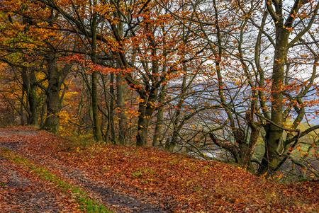 赤みがかった紅葉の森の泥道で美しい紅葉の風景 写真素材