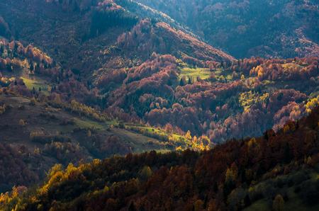 秋の森の丘の上のオレンジと赤い紅葉が美しい。山でゴージャスな雰囲気