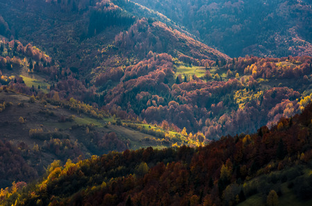 Beautiful orange and red foliage of autumn forest on hills. gorgeous atmosphere in mountains