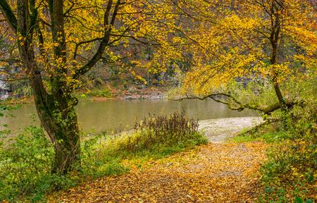 mooi herfstlandschap met gele bomen op rotsachtige kust. rivier stroomt aan de voet van een heuvel met rotsachtige klif