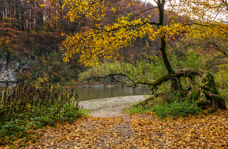 lovely autumnal scenery with yellow trees on rocky shore. river flows at the foot of a hill with rocky cliff Stock Photo - 85415214