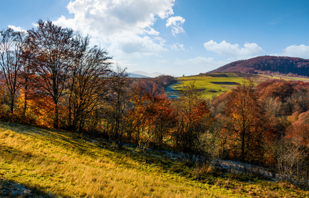 late autumn countryside landscape. forest with red foliage on a beautiful sunny day in mountainous rural area Stock Photo