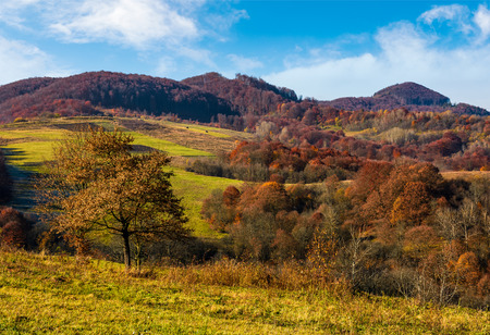 tree on hillside in late autumn countryside. forest with red foliage on a beautiful sunny day in mountainous rural area Stock Photo