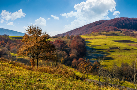 tree on hillside in late autumn countryside. forest with red foliage on a beautiful sunny day in mountainous rural area Banco de Imagens