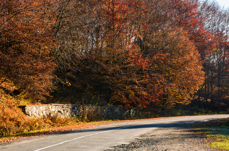 road through the forest with red foliage. beautiful autumn weather Stock Photo