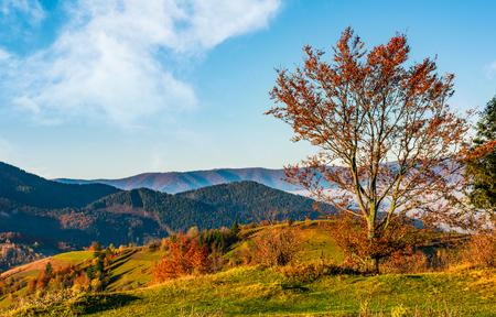 Baum am Hang im Herbst Berge. schöne helle Landschaft mit dunstigen Bergrücken in der Ferne Standard-Bild - 86032759