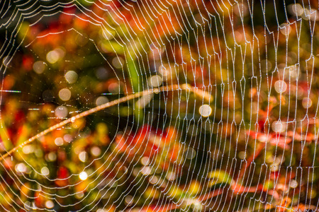 lovely background with web on beautiful foliage bokeh