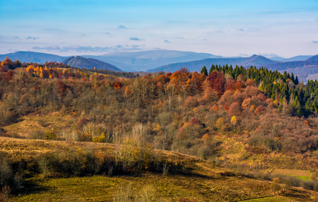 forest on a hill in front of a mountain ridge in autumn. gorgeous morning countryside landscape Reklamní fotografie