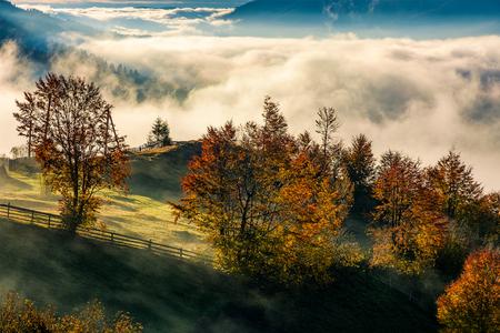 果樹園秋の山の中腹にフェンスの後ろに赤みを帯びた葉を持つ。上昇の霧谷と豪華な田舎