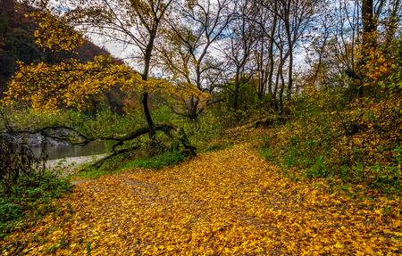 岩の多い海岸に黄色い木がある素敵な紅葉風景。岩の崖と丘の麓の川の流れ