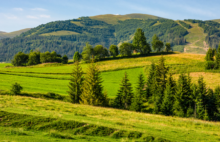 beautiful countryside with trees on hillside. lovely mountainous landscape in summer Stock Photo
