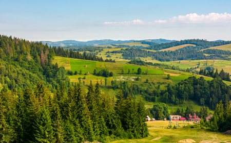 田舎地区の丘の上のトウヒ林。素敵な夏の風景 写真素材