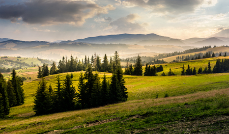 霧の日の出の丘のトウヒの森。夏のゴージャスな山の田園風景