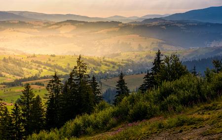 霧日の出丘の上のトウヒ林。夏の豪華な山間の田園風景です。「高度の表示