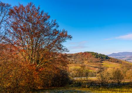 紅葉の田園地帯に赤い葉を持つ木。