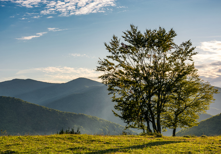 few trees on edge of a grassy hillside in evening light. lovely autumnal scenery in mountains Stock Photo