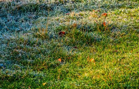 Gevallen bladeren op een berijpt gras. mooie natuur achtergrond Stockfoto
