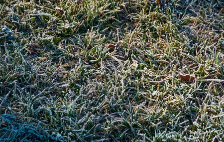 gevallen bladeren op een berijpt gras. mooie natuur achtergrond. uitzicht van boven