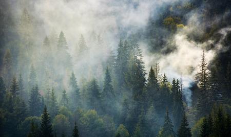 rook stijgt boven vuren bos. mooie achtergrond met natuurlijke texturen