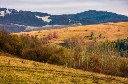 曇り空の下で秋の裸の森で丘をローリング 写真素材