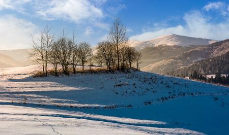 naked trees on snowy hillside on foggy winter sunrise. beautiful scenery in mountainous countryside