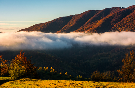 cloud rising above the forest in mountains, beautiful autumnal scenery at sunrise Stock Photo