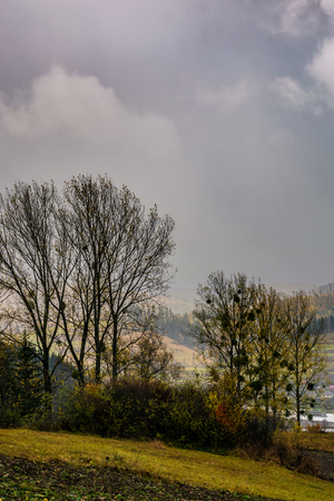 Bäume am Hang in Regenwetter . Schöne Landschaft Landschaft in den Bergen Standard-Bild - 86678469