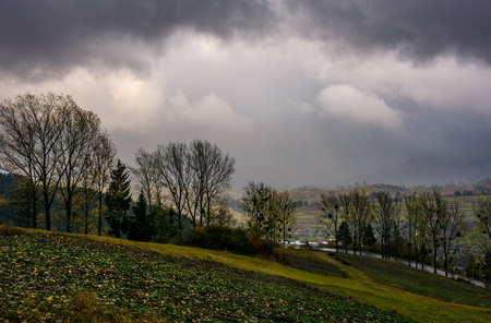 trees on hillside in rainy weather. lovely countryside landscape in mountains