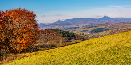 tree on hillside in mountainous autumn countryside. beautiful landscape with green grassy meadow, red foliage forest, village in and mountain ridge in a distance with high peak. fine autumnal weather Stock Photo