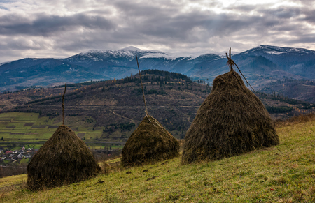 haystacks on grassy meadow in autumn mountains with snowy tops. hills with forest and weathered grassy meadows. gloomy cold weather with overcast moody sky Stock Photo