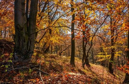美しい暖かい晴れた日に茶色の葉が黄金の森 写真素材 - 86944600