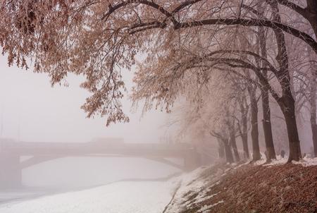 langste in Europa lindebaan op mistige winter en ijzige ochtend. Geheimzinnig landschap dichtbij de Masaryk-brug in Uzhgorod, de Oekraïne
