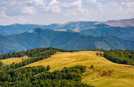 alpine grassy meadow in autumnal Carpathians. lovely landscape of TransCarpathia with beech forest on hills and gorgeous Svydovets mountain ridge in a distance Stock Photo