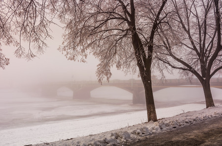 longest in Europe linden alley on winter foggy and frosty morning. Mysterious scenery near the Masaryk bridge in Uzhgorod, Ukraine Stock Photo