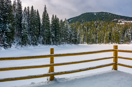wooden pier on forest lake in winter. beautiful morning scenery in spruce forest