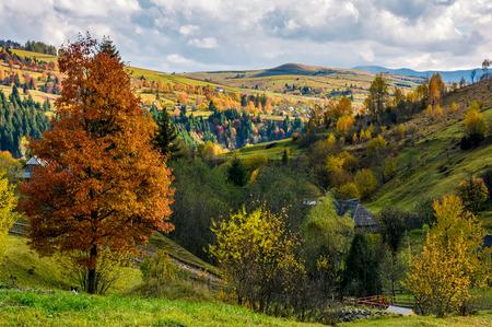 カルパティア村で黄色の葉を持つ木。バレーで素敵な秋の田園風景