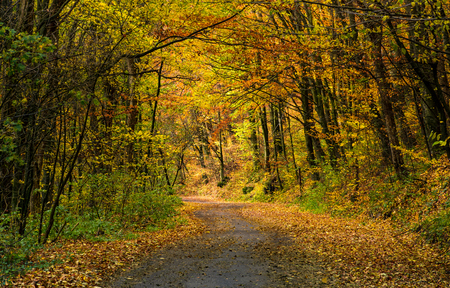 winding road through dark autumn forest. beautiful nature scenery with lots of colorful foliage on hillside Stock Photo
