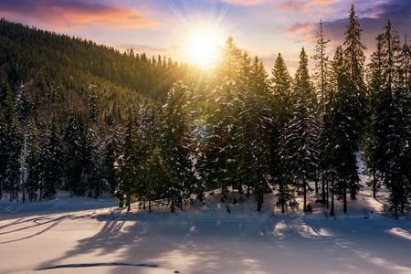 冬の夕日は、森をトウヒ。赤みがかった空の美しい風景