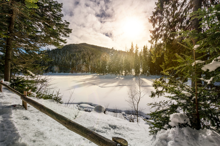spruce forest on a beautiful sunny winter day. lovely nature scenery in mountains Stock Photo