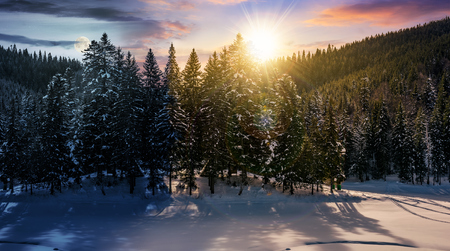 day and night time change concept in winter spruce forest. beautiful scenery of magic landscape