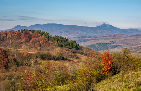autumn forest on hill in high mountains. beautiful nature scenery with high peak in a distance