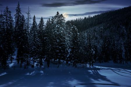 冬のトウヒの森の夜は満月の光。魔法の風景の美しい風景 写真素材