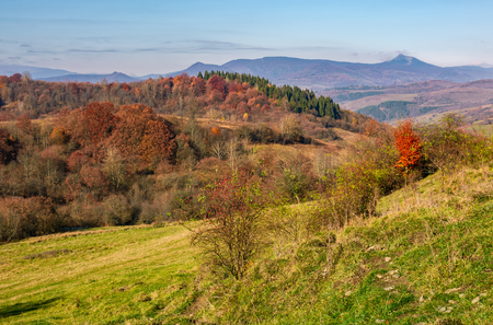 autumn forest with red foliage on hillside. beautiful nature scenery in mountains on warm a sunny day
