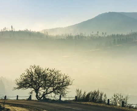 tree by the road on foggy sunrise in mountain. beautiful countryside scenery in late autumn