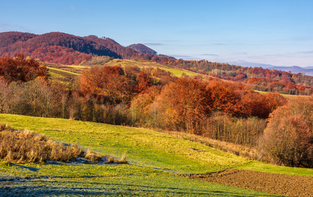 rural fields on hills in autumn. beautiful mountainous scenery with red foliage on trees Stock Photo