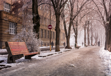 bench on longest linden alley in winter. mysterious and hazy morning with hoarfrost on the embankment of river Uzh