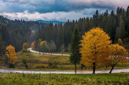yellow trees along the mountain road in autumn. beautiful nature scenery with cloudy evening sky