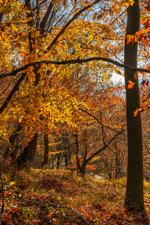 forest with red foliage on sunny day. ravishing nature background Stock Photo