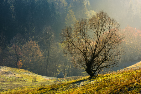 lonely naked tree on hillside. lovely autumn scenery on hazy morning Stock Photo